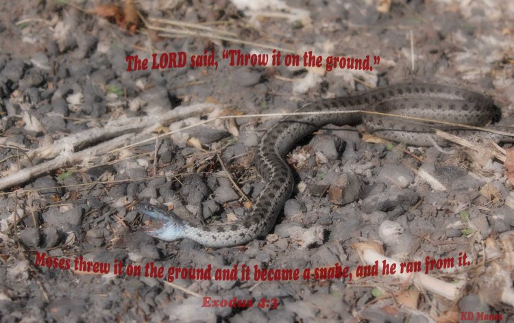 snake-exodus-4-3